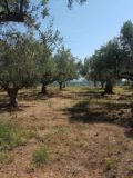 PL080 – Plot 1850 sqm – Rikia Messinias-120000 €